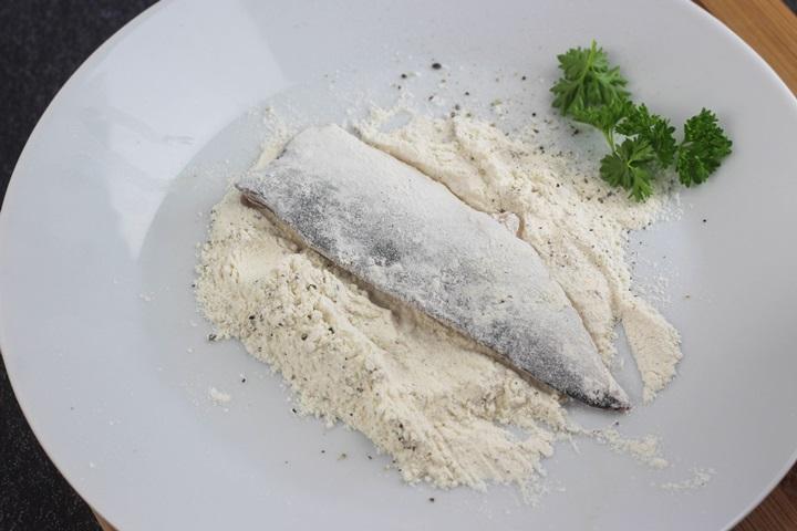 boston mackerel